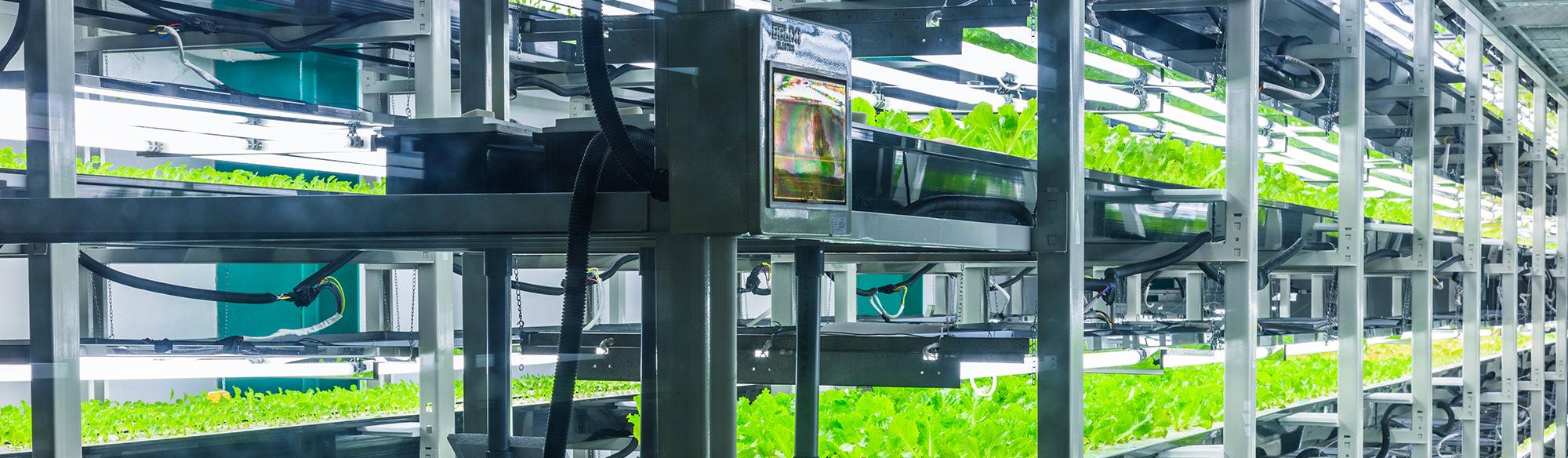Vertical farm: sostenibilità ed efficienza