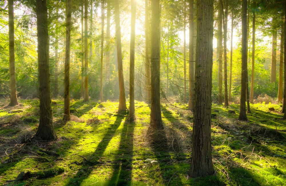 teleriscaldamento a biomassa legnosa